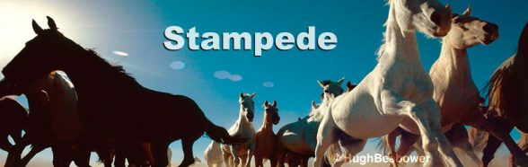 Stampede | Beebower Productions