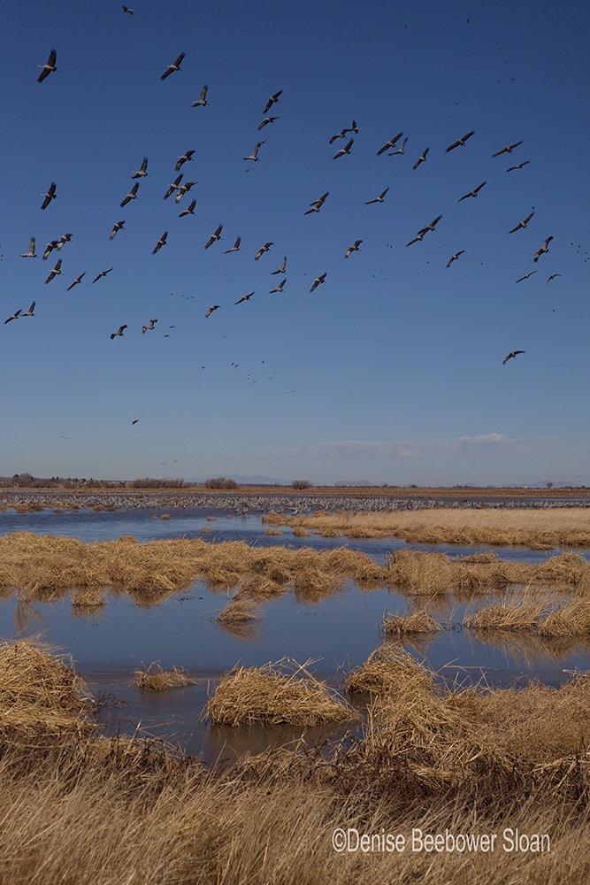 Incoming Cranes | Beebower Productions