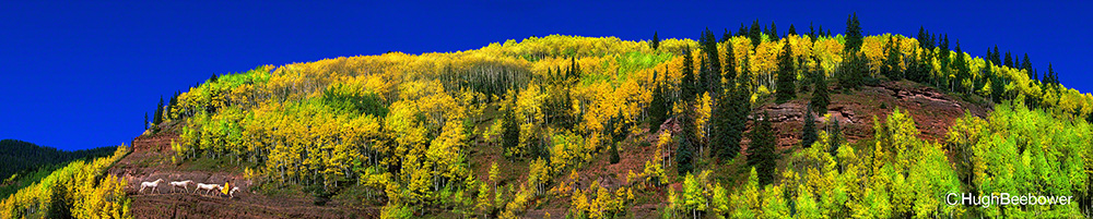 Fall, Aspens and Cowboy | Beebower Productions, Inc.
