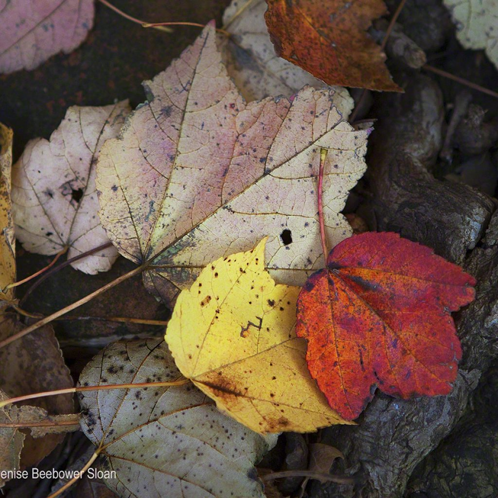 The Remains of Fall | Beebower Productions, Inc.
