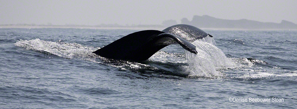 Whale Tail | Beebower Productions, Inc.