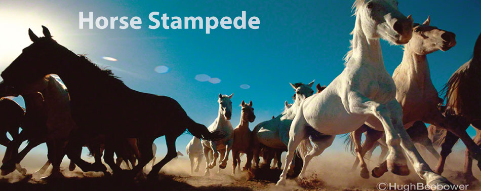 Horse Stampede | Beebower Productions