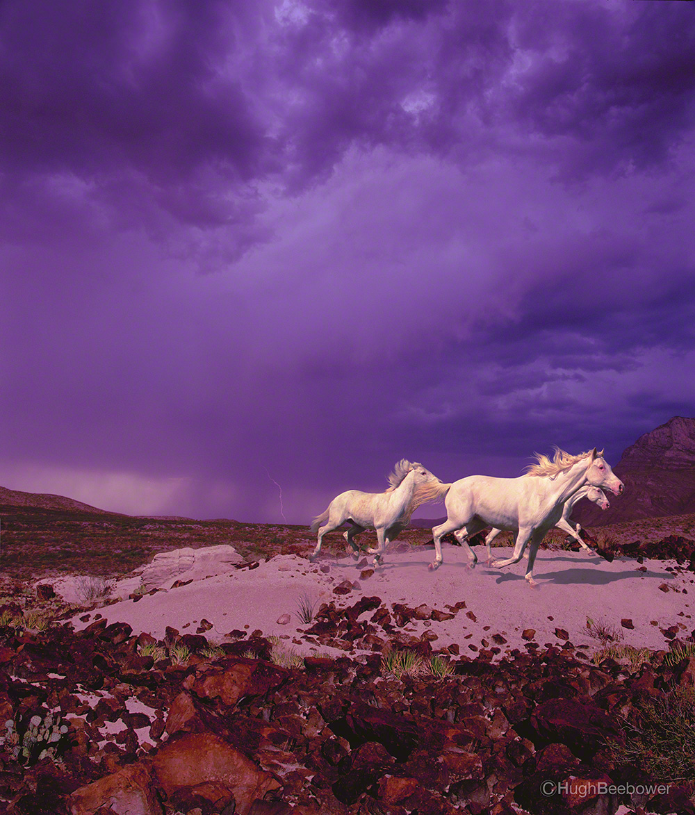 Storm Horses | Beebower Productions, Inc.