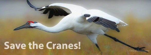 Save-the-Cranes | Beebower Productions